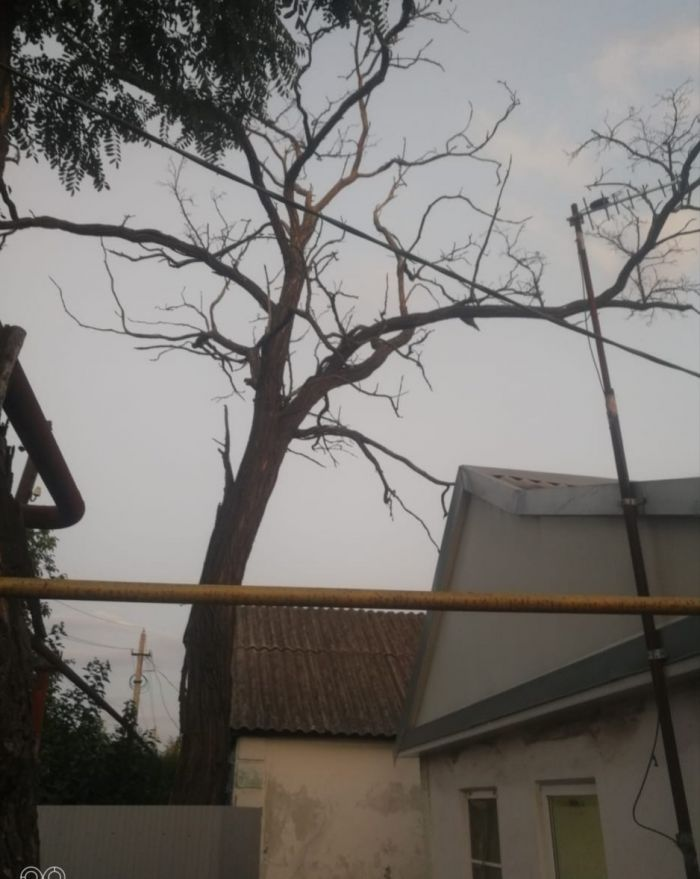 Вид дерева с моего двора