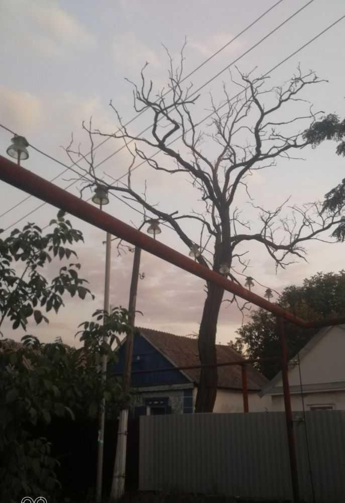 Вид дерева с улицы