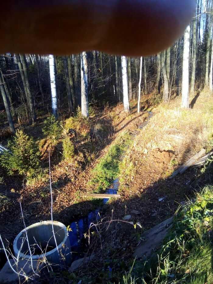 Отвод дренажных стоков в лесополосу , и далее в лесной ручей