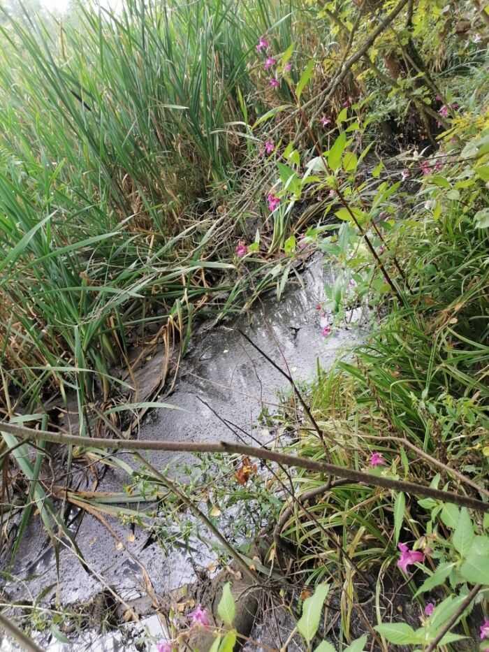 канализационно-бытовые отходы утекают в природу