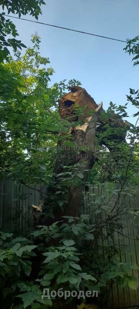 Факт нахождения дерева на муниципальной собственности